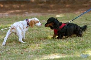 California's Attitude Towards Leashes and Dogs