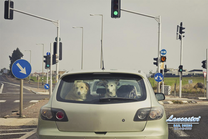 Driving with Pets Can Be Distracting