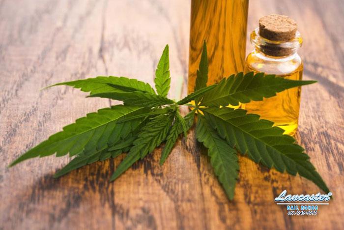 california marijuana law