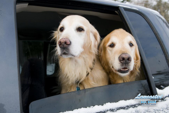 can you leave a dog in cold car lancaster bail bonds